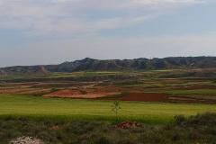 Campos-de-cereal-primavera-2020